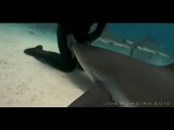 Как  усыпить акулу.Опасный трюк (2011)